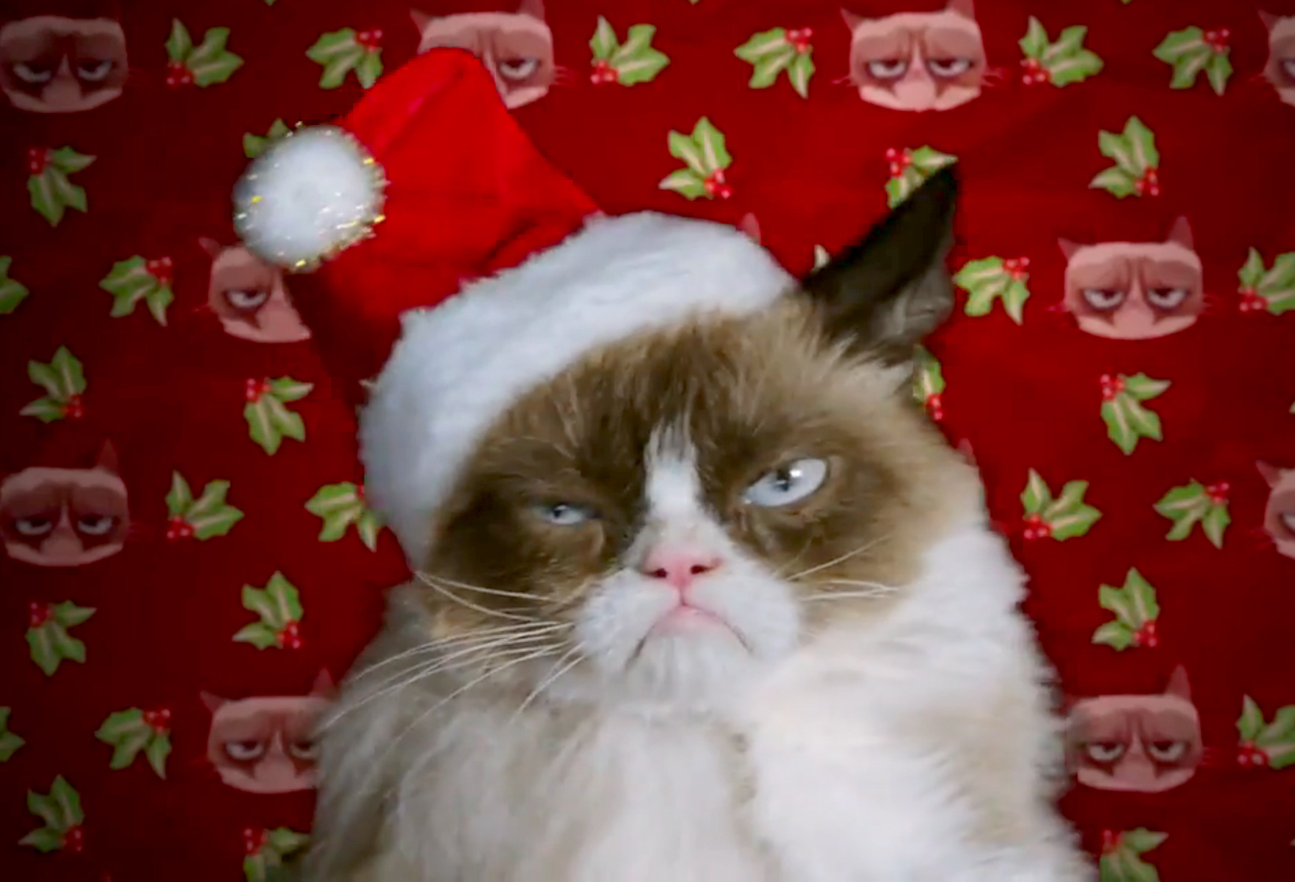 grumpy-cat-christmas.jpg.jpg
